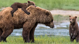 Bear watching reservation